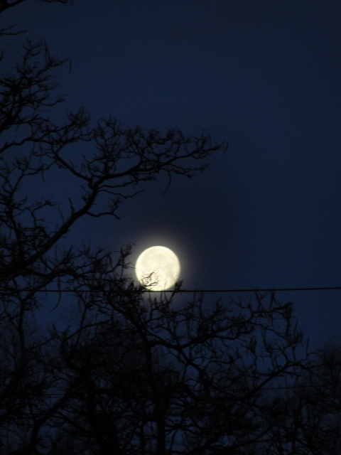 morning moon (480x640)