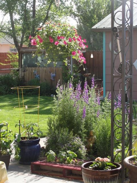 backyard (480x640)