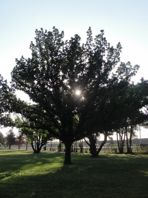 park (480x640)